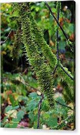 Moss Beauty Acrylic Print by Jeanette C Landstrom