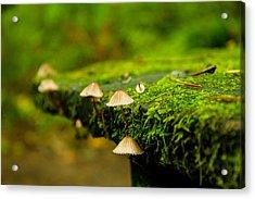 Moss Close-up Acrylic Print