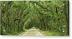Moss Covered Trees On Botany Bay Road  Edisto Island Sc Acrylic Print