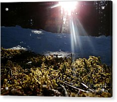 Moss In The Sunlight Acrylic Print by Steven Valkenberg