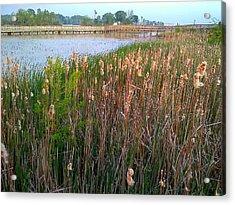 Moss Landing Washington North Carolina Acrylic Print