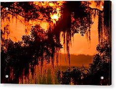 Moss Meets Sun  Acrylic Print