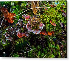 Moss Mushrooms And Knocks Acrylic Print
