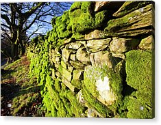 Moss On A Drystone Wall Acrylic Print by Ashley Cooper