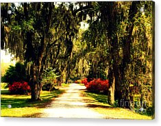 Moss On The Trees At Monks Corner In Charleston Acrylic Print by Susanne Van Hulst