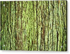 Moss On Tree Bark Acrylic Print