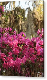 Acrylic Print featuring the photograph Moss Over Azaleas by Patricia Schaefer