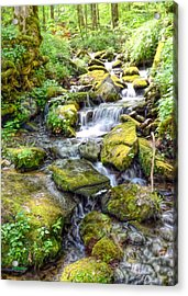 Mossy Creek Acrylic Print by Bob Jackson