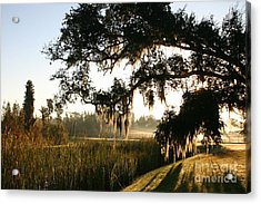 Acrylic Print featuring the photograph Mossy Oak Morning by Jeanne Forsythe