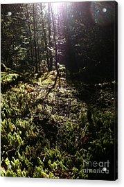 Mossy Patch Acrylic Print by Steven Valkenberg