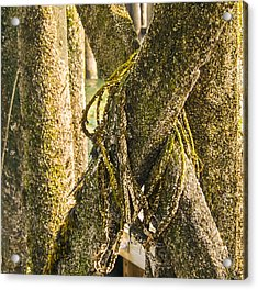 Mossy Pier Acrylic Print by Ernest Puglisi