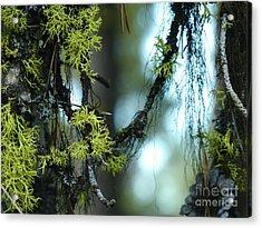 Mossy Playground Acrylic Print