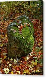 Mossy Rock Acrylic Print by Sandra Updyke