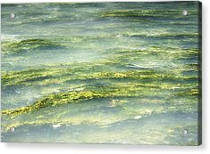 Mossy Tranquility Acrylic Print