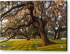Mossy Trees At Sunset Acrylic Print by Debra and Dave Vanderlaan