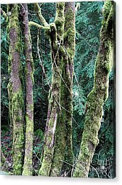 Acrylic Print featuring the photograph Mossy Trees by Gerry Bates