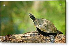 Mossy Turtle Acrylic Print