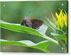 Moth Flower Acrylic Print