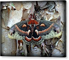 Moth On Paper Birch Acrylic Print