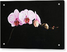 Acrylic Print featuring the drawing Moth Orchid by Marna Edwards Flavell
