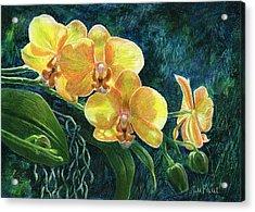 Moth Orchids Acrylic Print by Sandra LaFaut