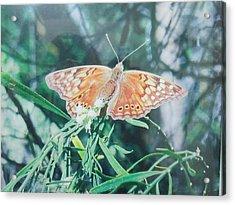 Moth Acrylic Print by Rosalie Klidies