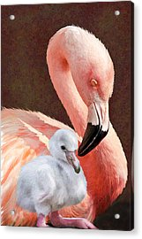 Mother And Baby Flamingo Acrylic Print by Jane Schnetlage
