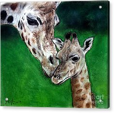 Mother And Baby Giraffe Acrylic Print