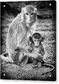 Mother And Baby Monkey Black And White Acrylic Print by Adam Romanowicz