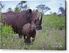 Mother And Baby Rhino Acrylic Print