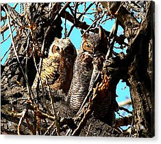 Mother And Baby Acrylic Print by Steven Reed