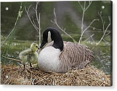 Mother And Baby Acrylic Print by Veronica Ventress