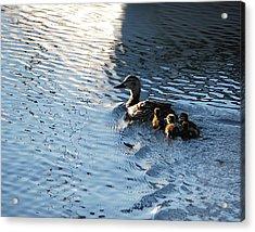 Mother Duck With Babies Canandaigua Lake 2008 Acrylic Print by Joseph Duba