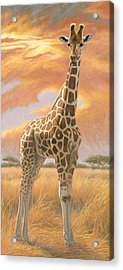 Mother Giraffe Acrylic Print by Lucie Bilodeau