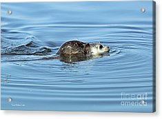 Mother Harbor Seal And Pup Acrylic Print