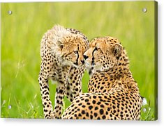 Mother Love Acrylic Print by 1001slide