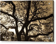 Acrylic Print featuring the photograph Mother Nature's Design by John Wadleigh