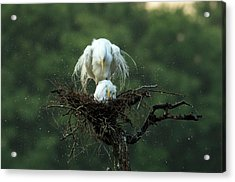 Motherly Love Acrylic Print by Libby Zhang