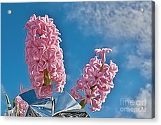 Mothers Day Duo. Acrylic Print by Geoff Childs