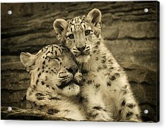 Mother's Love Acrylic Print by Chris Boulton