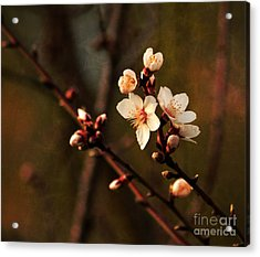 Acrylic Print featuring the photograph Mother's Spring Blossoms by Marjorie Imbeau