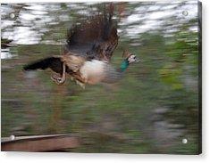 Motion In Air Acrylic Print by Mahendra Mithapara