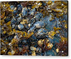 Mound Of Mussels Acrylic Print by Sarah Crites