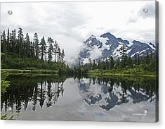 Mount Baker- Lake- Fir Trees And  Fog Acrylic Print