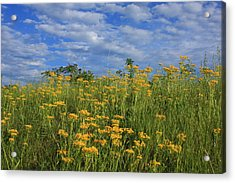 Mount Cheaha Goldenrod-alabama Acrylic Print by Mountains to the Sea Photo