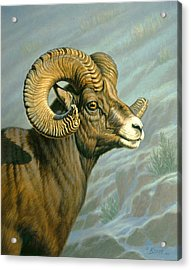 Mount Everts Ram Acrylic Print by Paul Krapf