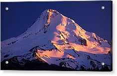 Mount Hood Last Light Acrylic Print by Darren  White