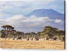 Mount Kilimanjaro Amboseli  Acrylic Print