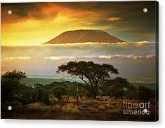 Mount Kilimanjaro Savanna In Amboseli Kenya Acrylic Print