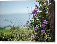 Mount Of Beatitudes Acrylic Print
